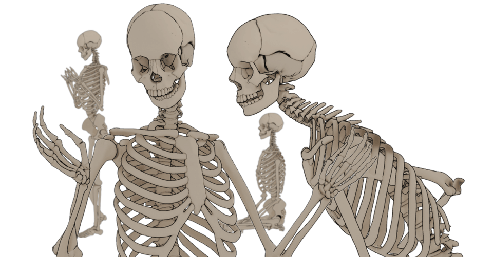 Need a skeletal anatomy model? - CLIP STUDIO ASK